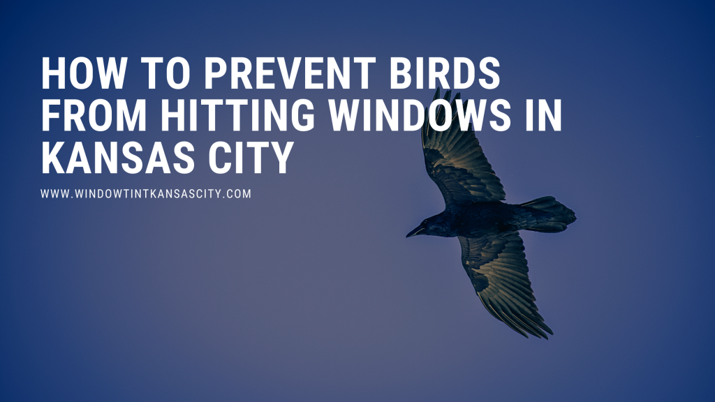 how to prevent birds hitting windows kansas city