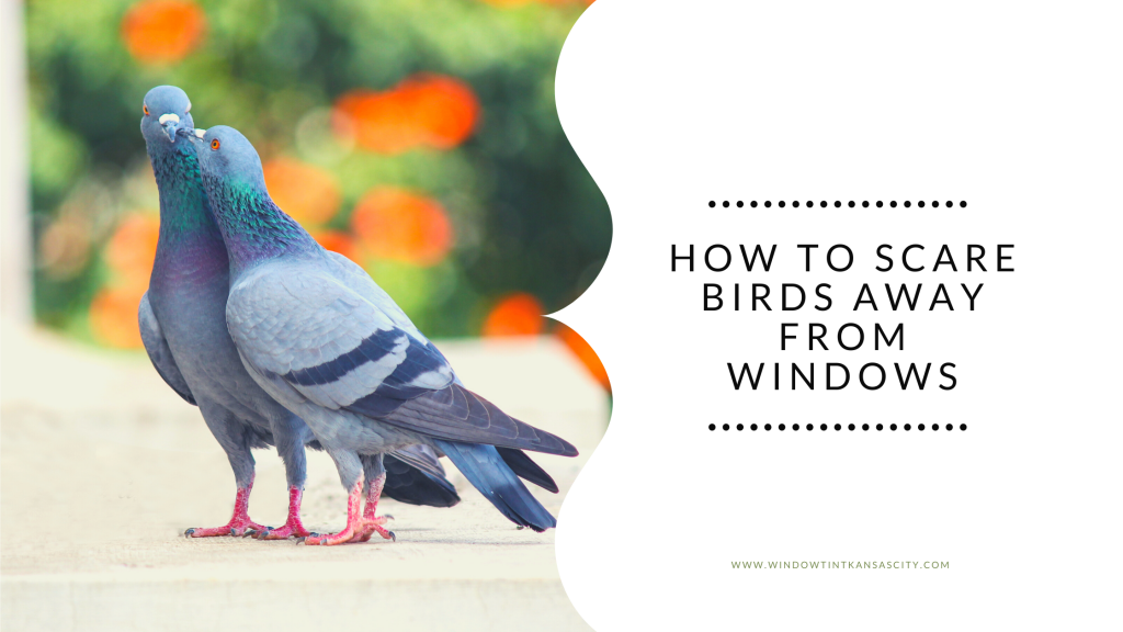 scare birds away from windows