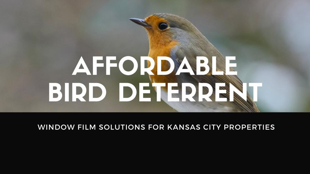 bird deterrent window film kansas city